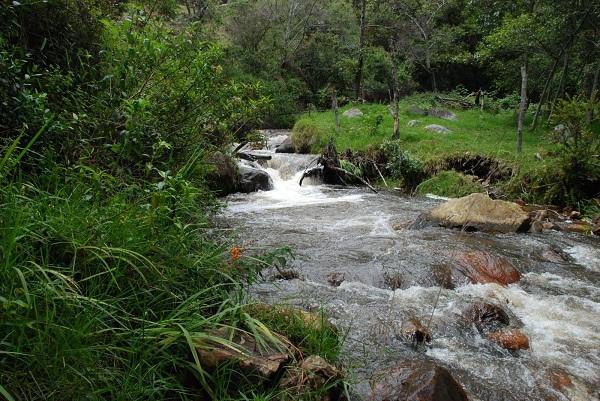 Gobernación trabaja en el Pago por Servicios Ambientales