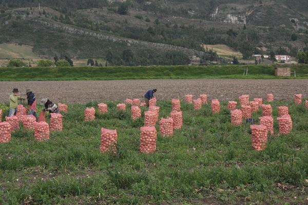 Pequeños productores a presentar propuestas para modernización y fortalecimiento del campo