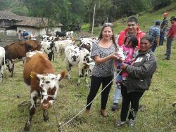 Gobernación hizo entrega de 30 novillas a mujeres campesinas en Chiscas