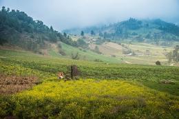 Plan de Inversión Ambiental atenderá necesidades de los 123 municipios de Boyacá