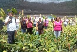 Desarrollo Humano hizo entrega de sistema agroforestal de cacao y plátano en Coper