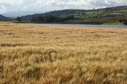Agrotec congregará a pequeños, medianos y grandes productores del Agro Boyacense