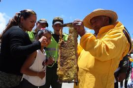 Boyacá se unió a la campaña mundial por la defensa de las abejas y los polinizadores