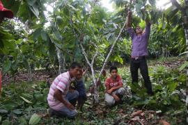 Boyacá, Nariño y Putumayo son los finalistas del Concurso Nacional de Cacaos Finos y Aroma de Oro