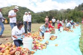 Programa 'Colombia Siembra' convoca a productores de cacao a inscribirse hasta este miércoles