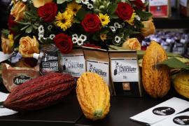 Gobernación recibe con beneplácito postulación del cacao de Boyacá a Concurso Nacional