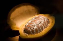 Boyacá tiene el mejor cacao de Colombia