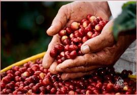 Caficultores de Boyacá se capacitan en el manejo de plaguicidas químicos de uso agrícola