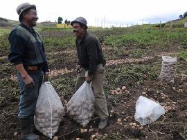 Continúa construcción de Política Pública Agropecuaria de Boyacá