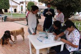 Más de 4.500 animales fueron atendidos en Jornada de Vacunación Antirrábica en Chiquinquirá