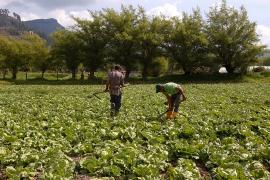 Jornada de oferta institucional y comercial de la cadena de hortalizas