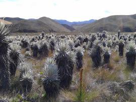 Gobernación supera 10 mil hectáreas adquiridas en ecosistemas estratégicos
