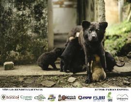 Gobernación premiará a ganadores de concurso fotográfico de animales