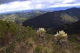 El cuidado del medio ambiente estrategia del Plan de Desarrollo de Boyacá y el Acuerdo de Paz