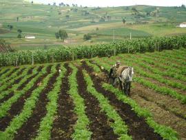 Avanza en Boyacá construcción del diagnóstico para articular trabajo de seguridad alimentaria