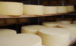 400 millones de pesos más para el sector lácteo en Boyacá