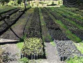 Todos a visitar el Jardín Botánico de Tunja