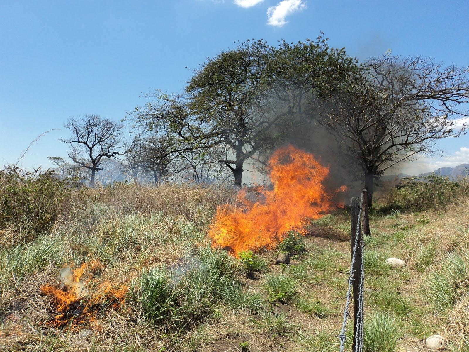 bomberosyopal.blogspot.com