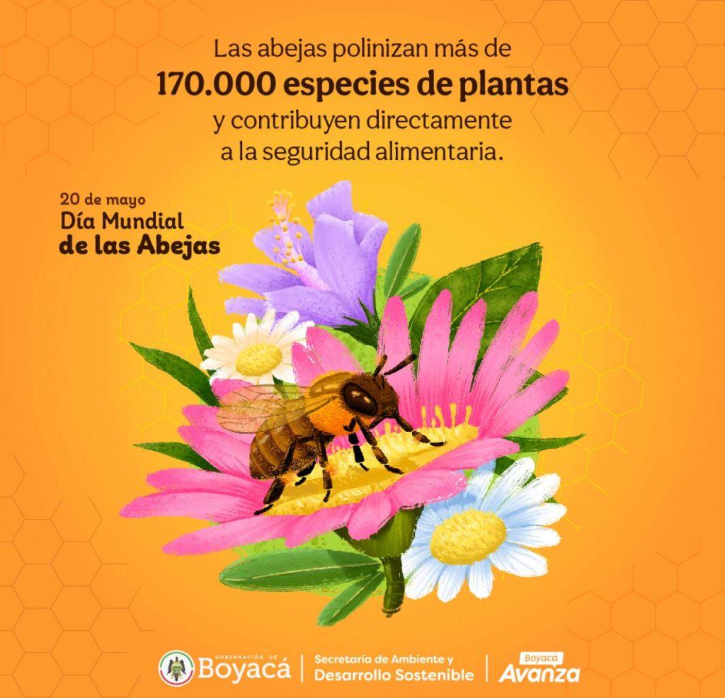 Boyacá le apuesta a la apicultura sostenible, tema esencial que esta incluido en el plan de desarrollo