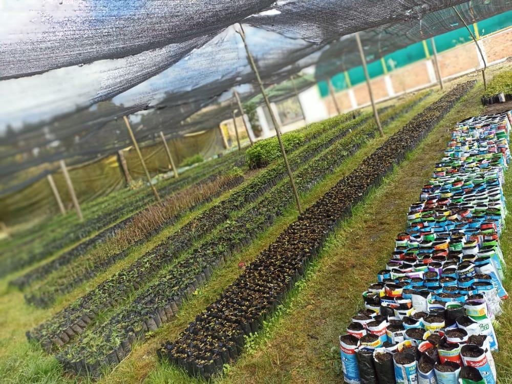 """Secretaría de Ambiente y Desarrollo Sostenible retoma la estrategia """"Reutilizando germinamos esperanzas"""""""