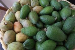 Panel-gastronomico-encuentro-intercultural-colombia-India-fotos-Darlin-Bejarano-19-Large